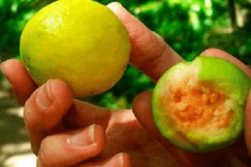 This Fruit Reduces Stress Faster than Insulin & Will Cause Brilliant Hair Development