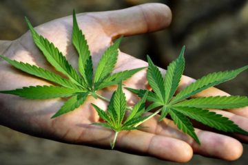 National Cancer Institute Quietly Confirms that Cannabis can Cure Cancer