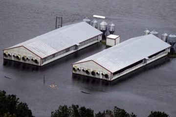 While Thousands of People Evacuated from Hurricane Florence, Millions of Animals Drowned on Factory Farms
