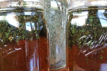 Nettle Infusions: Learn How to Make Them and Boost Your Energy & Vitality & Alleviate Allergies