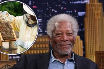 Inspirational Stories: Morgan Freeman Converts His 124 Acre Ranch into a Bee Sanctuary to Save Bees