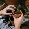 Gardening-A Natural Antidepressant, a Study Shows
