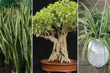 The 6 most Potent Plants: Generate Oxygen at Night & Are Perfect for Bedrooms