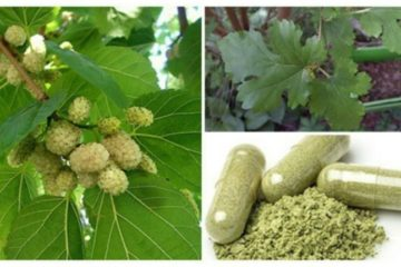 You Can Grow It Anywhere: Powerful Plant that Can Help with Tumors, Diabetes & Hypertension