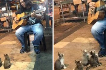 Street Singer Ignored by everyone until 4 Kittens Come to Show Support
