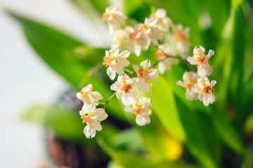 8 Best Smelling Houseplants to Perfume Your Home Naturally