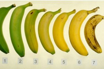 Read This & You Will Never Look at Bananas in the Same Way