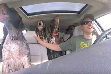 Life Is Beautiful: 4 Dogs Flip Out in Car when they Hear It Is Park Time!