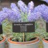 Keep Lavender in Your Bedroom: It Betters Sleep, Lowers Anxiety & Depression