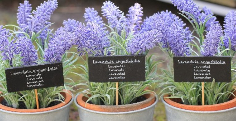 Keep Lavender in Your Bedroom: It Helps Improve Sleep, Lower Anxiety & Depression