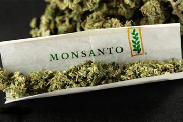 Corporate Takeover of Cannabis: How Are Bayer & Monsanto Trying to Take Over the Cannabis Market?