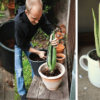 Aloe Vera: Best Health Benefits & How to Grow it at Home