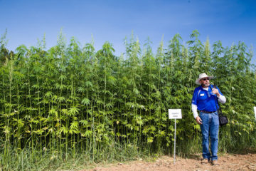 Eco-Friendly Hemp Could Save Us from Oil, Avert Deforestation, Treat Cancer so Why It Is Illegal?