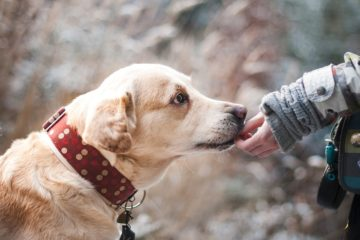 Study Shows: Dogs Can Really Detect Cancer in Humans with 97 % Precision