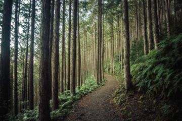 Forest Bathing: a Japanese Practice that Helps You Lead a Healthier Life