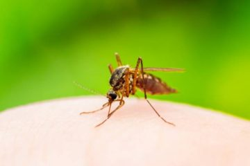 A Mosquito-Borne Virus Linked with Brain Swelling Detected in Florida