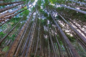 New Zealand Plants Billion Trees to Fight Off Climate Change