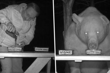 "This Man ""Turned ""Bears Who Kept Coming to His Bee Farm to Steal Honey into Honey Tasters"