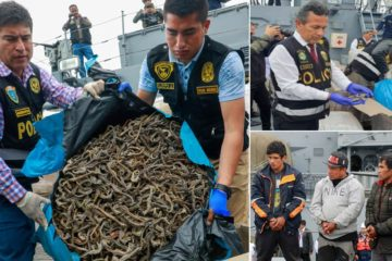 Authorities Intercept a Vessel Illegally Transporting 12.3 Million Seahorses Extracted from the Pacific