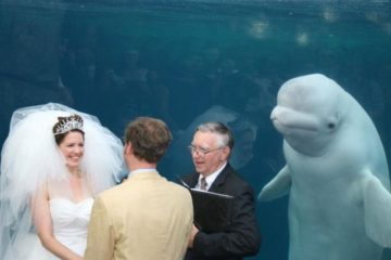 Cute Beluga Whale Photobombs Bride on Her Wedding Day & Sparks Funny Memes