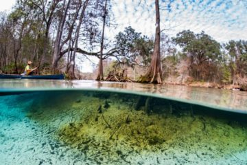 Nestle Plan to Pump 1.1 Million Gallons of water from Natural Springs in Florida to Sell in Bottles