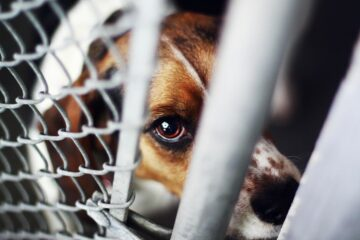 Animal Cruelty Is now a Federal Crime: President Trump Signs the New Law