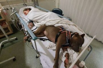 Our Best Friends: Service Dog Doesn't Want to Leave Owner's Side after Saving Her Life
