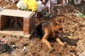 Heartbroken Dog Tries to Dig into Dead Owner's Tomb