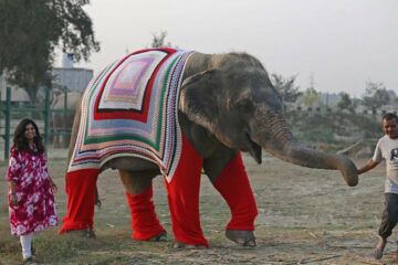 Indian Villagers Knit Jumpers for Elephants to Protect them from Cold