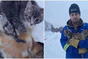 This Canadian Oil Worker Saves 3 Frozen Kitties Using His Morning Cup of Coffee