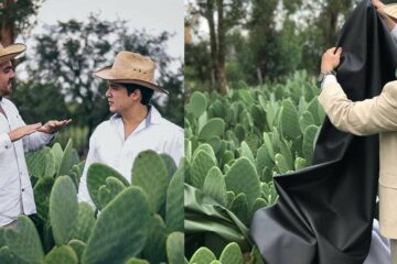 Two Entrepreneurs from Mexico Created an Eco-Friendly & Vegan Leather Using Cactuses