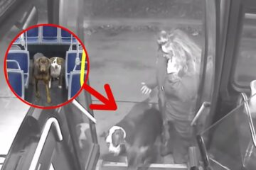 Bus Driver Sees 2 Wandering Dogs on the Road- Pulls in & Takes Them Inside