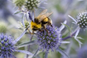 If You Want to Help Save Bumblebees, Plant these Flowers in Your Garden this Spring