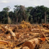 Deforested Amazon Rainforest Is Releasing more CO2 than it Absorbs