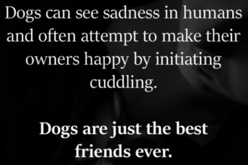 Are Dogs Really Our Best Friends?