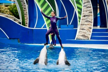 SeaWorld Announces an End to Dolphin Stunts, PETA Wants more