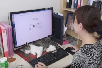 This Japanese Company Encourages Employees to Bring their Cats to Work to Fight Off Stress & Tiredness
