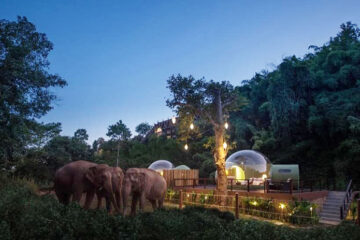 For $585 per Night, You Can Sleep in a Jungle Bubble in Thailand with Rescue Elephants Walking by