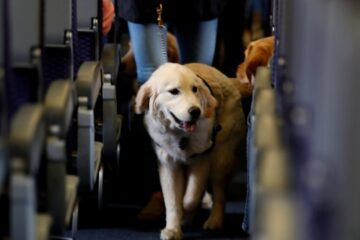New Rules in the US May Remove Emotional Support Animals from Planes