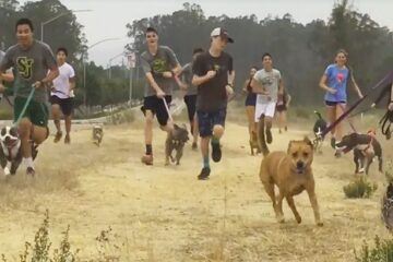 A High School Running Team Takes Shelter Dogs for an Exciting Morning Run: Dogs Are Enjoying It