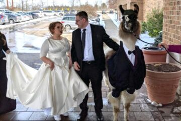 This Man Brought a Llama in a Tuxedo at His Sister's Wedding: Her Reaction Went Viral