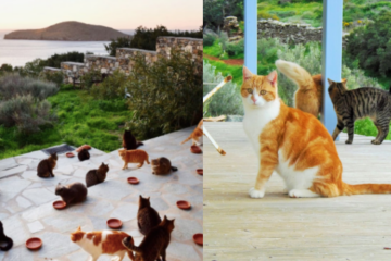 Paradise for Cat Lovers: This Cat Sanctuary in Looked for a Caretaker to Live on a Greek Island & Take Care of 55 Cats