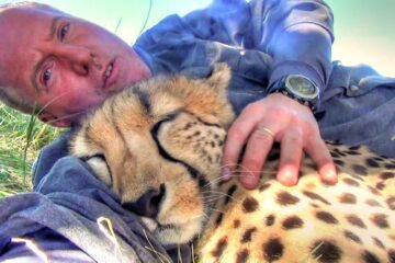 A Cheetah Sees a Photographer Resting under a Tree, Decides to Join Him