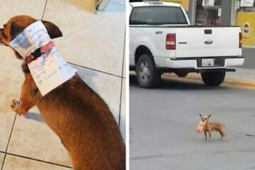 Mission Accomplished: During Quarantine, Owner Sends His Dog to Buy Him Cheetos & He Succeeds